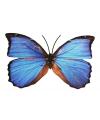 Blauwe gekleurde metalen vlinder
