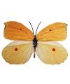 Licht gekleurde metalen vlinder