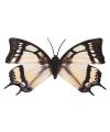 Zwart witte metalen vlinder 30 cm